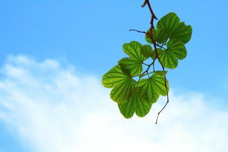 feuilles-vie